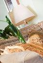 Barock stil för sofa för lampdelkupa Royaltyfria Bilder