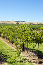Barossa valley australia landscape of Royalty Free Stock Photo