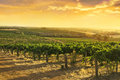 Barossa Valley Vineyards Royalty Free Stock Photo