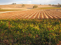 Barossa Wine Valley Landscape. Royalty Free Stock Photo