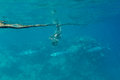 Barracuda on background coral reef Royalty Free Stock Photography