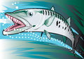 Barracuda illustration of a dangerous and aggressive Stock Photos