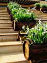 Barrel planters on steps Stock Photos