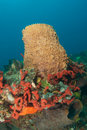 Barrel Sponge and Organ Pipe Sponge Royalty Free Stock Photography