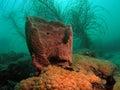 Barrel Sponge and Sea Plumes Royalty Free Stock Photo