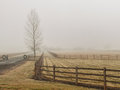 Barren tree and fence in fog beside wooden the winter Stock Image