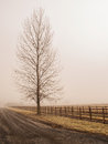 Barren tree and fence in fog beside wooden the winter Royalty Free Stock Image