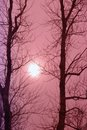 Barren trees and a truggling sun. Royalty Free Stock Photo