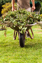 Barrow in move the gardener is banking the over the grasland Royalty Free Stock Image