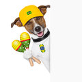 Barzil dog brazil samba with shakers behind white banner Stock Images