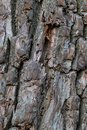Base wooden vertical gray brown bark background design forest natural weathered surface Royalty Free Stock Photo