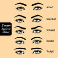 Basic eyebrow shape types vector illustration