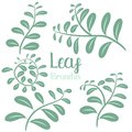 Leaf branches vector design illustration isolated on white background