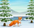 Fox In The Winter Forest Hunti...