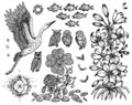Design set with stork, lily, fish and nature symbols isolated on white.