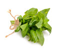 The basil bunch with a jute rope Royalty Free Stock Photo