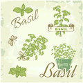Basil herb plant nature vintage background packaging calligraphy Stock Photos