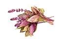 Basil herb purple Royalty Free Stock Photo