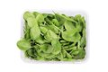 Basil herbs close up in box. Royalty Free Stock Photo