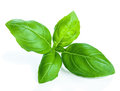 Basil isolated Royalty Free Stock Images