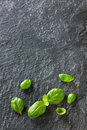 Basil leaves on black stone Royalty Free Stock Photo