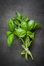 Basil leaves at dark. Royalty Free Stock Photo
