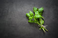 Basil leaves at dark. Royalty Free Stock Photo