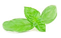 Basil leaves fresh on white Stock Photo