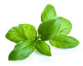 Basil leaves over white Stock Photo