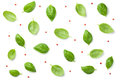 Basil Leaves with Red Peppercorns Isolated on White Background Royalty Free Stock Photo