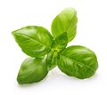 Basil leaves spice closeup Royalty Free Stock Photo