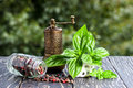 Basil pepper and pepper mill on wooden board in summer Royalty Free Stock Photography