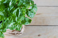 Basil plant against wooden background copy space Royalty Free Stock Photography
