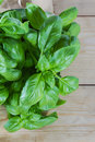 Basil plant against wooden background copy space Stock Photography