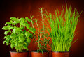 Basil rosemary and chives fresh green herbs in pots Royalty Free Stock Photography
