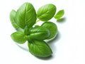 Basil on white background Royalty Free Stock Photo