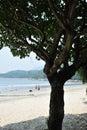 Bask the sun in the beach Stock Photos