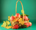 Basket with apples Stock Photography