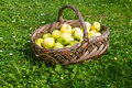 Basket with apples on grass Stock Photo