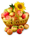 Basket with apples image of a of on a white background Royalty Free Stock Image