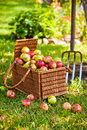 Basket of apples with pitchfork Stock Image