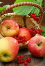 Basket of apples and viburnum. Stock Photography