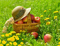 Basket with apples and women s hat on a meadow Stock Photography