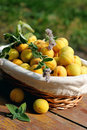 Basket of apricots and mint Royalty Free Stock Photography