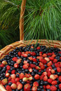 Basket of Berries Royalty Free Stock Images