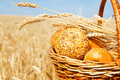 Basket with bread in a wheat field Royalty Free Stock Photo