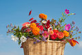 Basket of brilliantly colored flowers and fall fol Royalty Free Stock Image