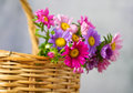 Basket brown with colourful flowers Royalty Free Stock Photos