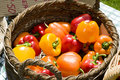 Basket of capsicums Stock Photography