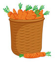Basket of carrots Stock Photo